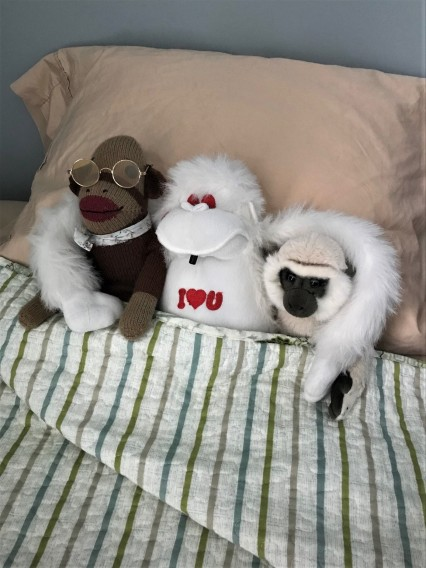 monkeys in bed 2